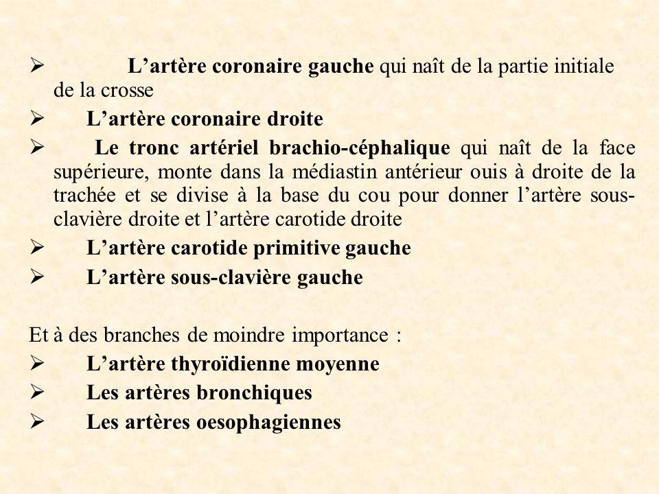  L'artère coronaire gauche qui naît de la partie initiale de la crosse  L'artère coronaire droite  Le tronc artériel brachio-céphalique qui naît de