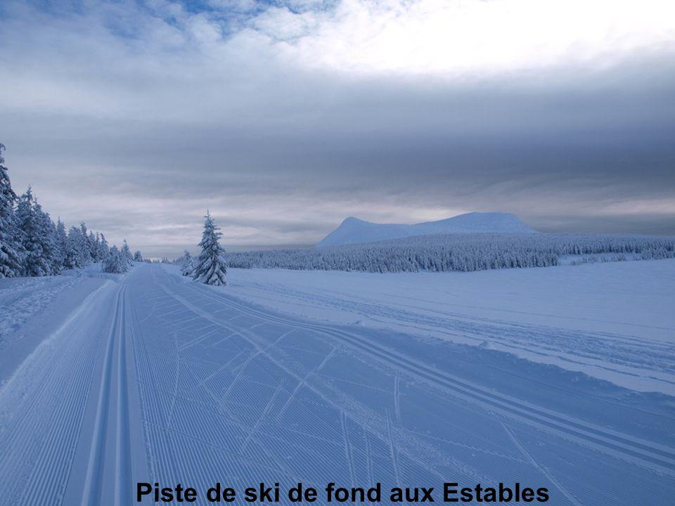 Piste de ski de fond aux Estables