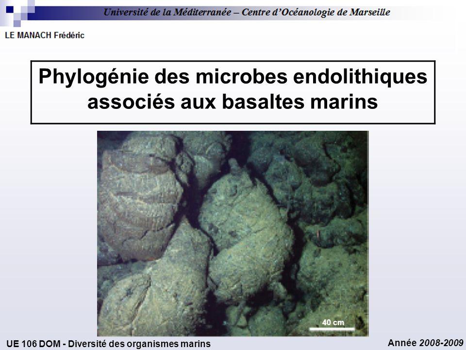 Année 2008-2009 Phylogénie des microbes endolithiques associés aux basaltes marins UE 106 DOM - Diversité des organismes marins 40 cm