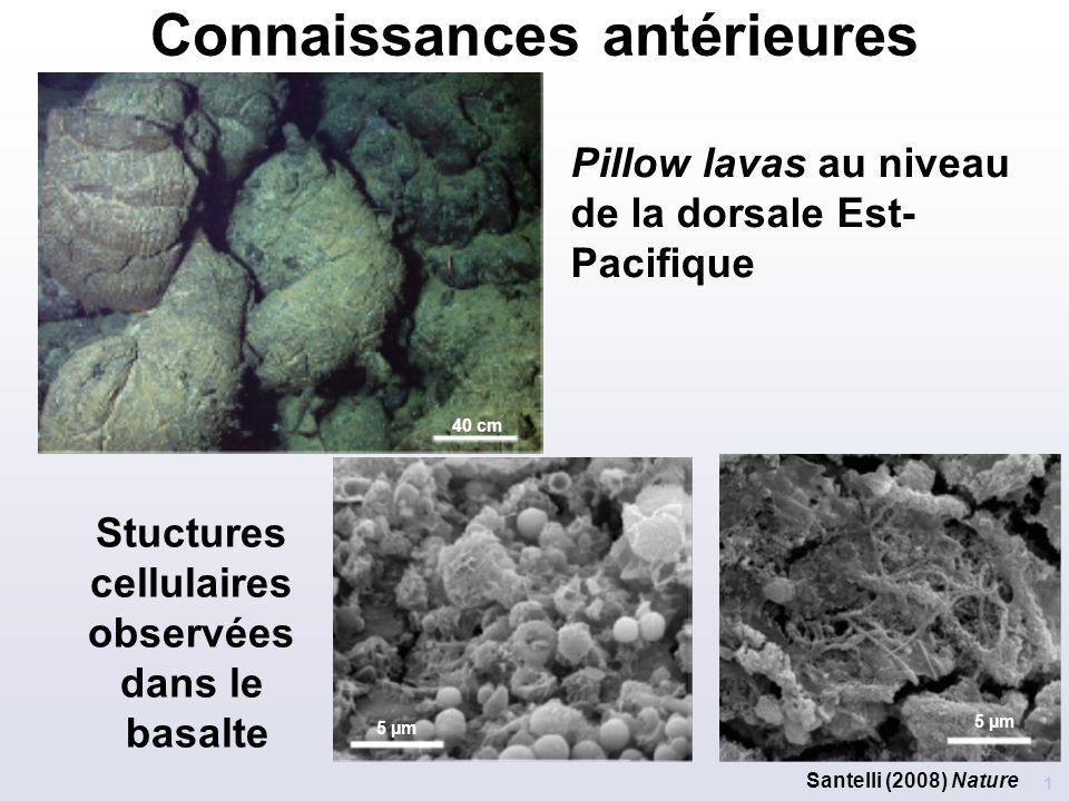 Connaissances antérieures 1 Stuctures cellulaires observées dans le basalte Pillow lavas au niveau de la dorsale Est- Pacifique 5 µm 40 cm Santelli (2