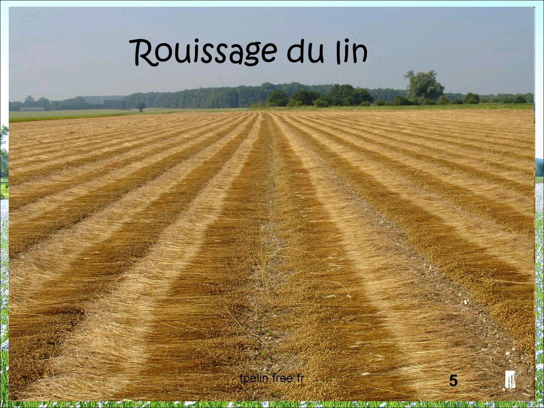 Rouissage du lin 5 tpelin.free.fr