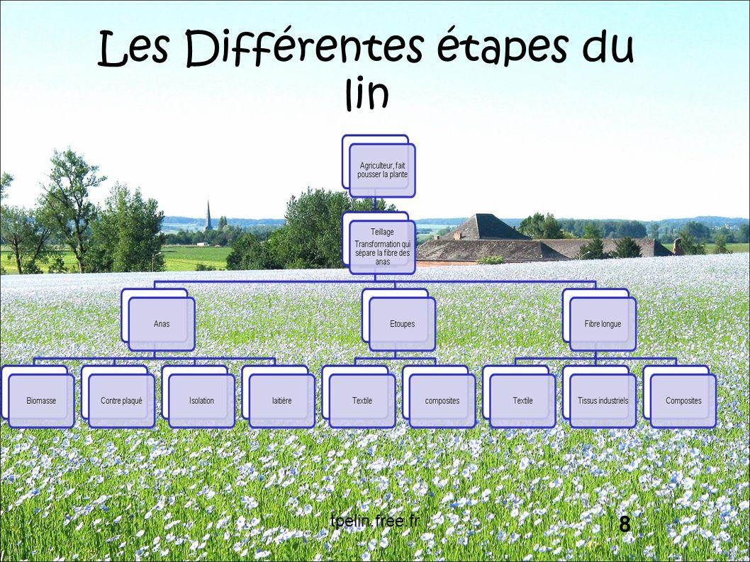Les Différentes étapes du lin 8 tpelin.free.fr
