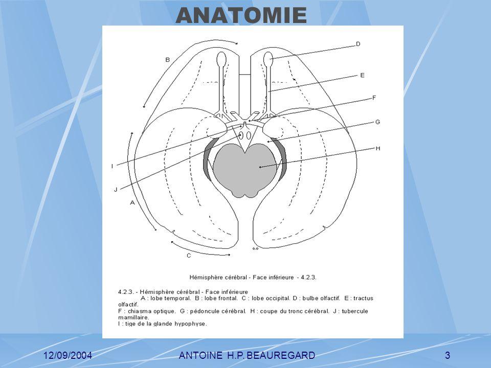 12/09/2004ANTOINE H.P. BEAUREGARD4 ANATOMIE