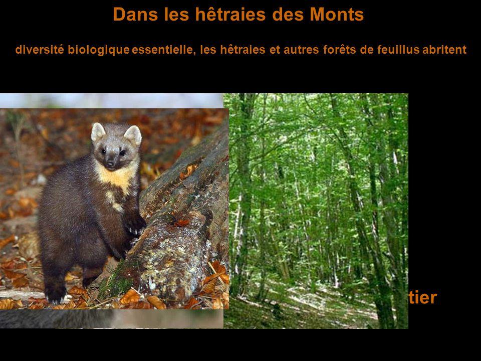 Au bord des étangs du Forez les étangs abritent une faune souvent protégées parmi laquelle Le campagnol amphibie Le putois d'Europe L'aigrette garzette