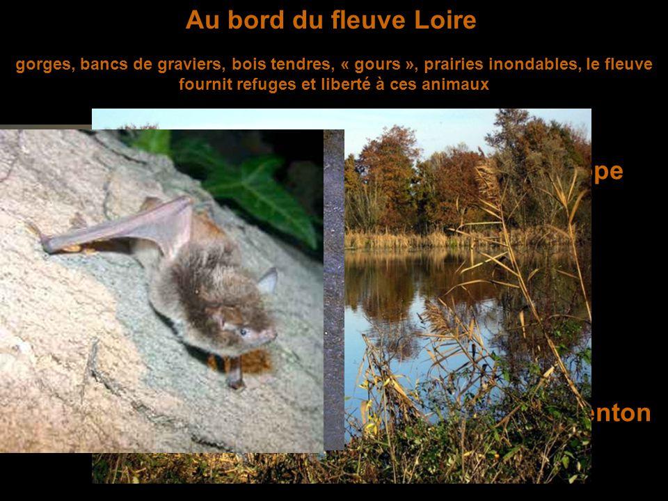 Dans les Hautes Chaumes constituées par des landes et des prairies d'altitude, milieux naturels sans forêt au climat plutôt rude où vivent Le lièvre brun Le renard roux L'hermine Le pipit farlouse