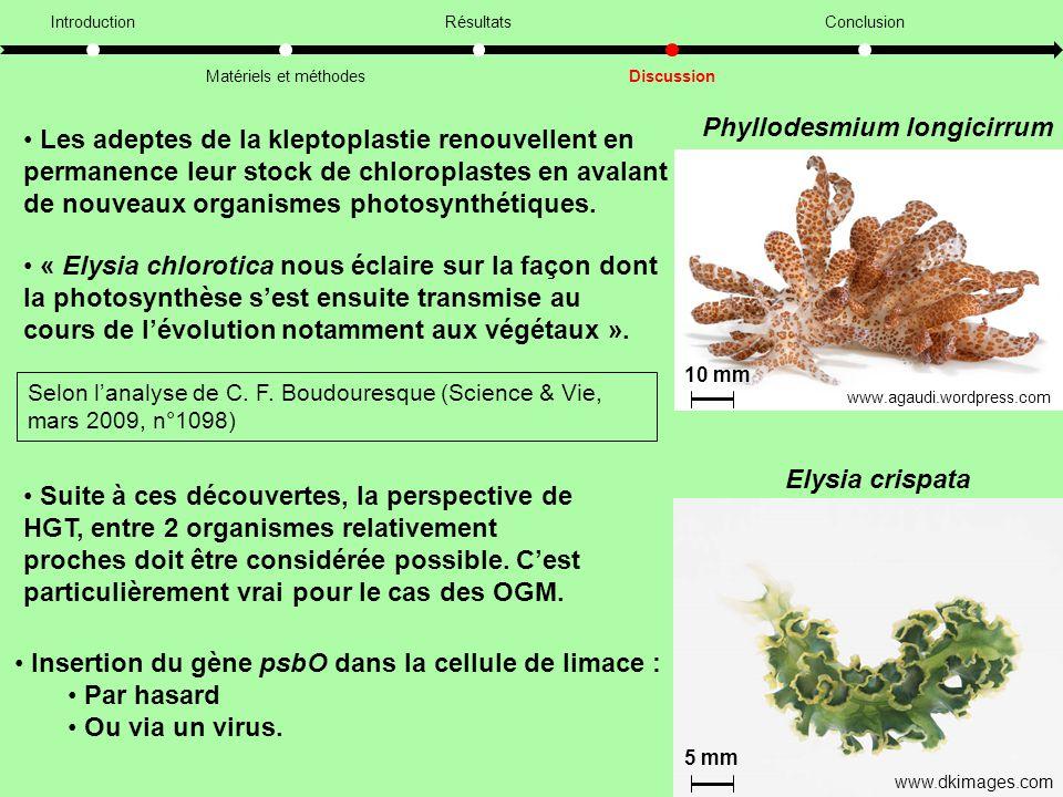 11 Introduction Matériels et méthodes Résultats Discussion Conclusion • Les adeptes de la kleptoplastie renouvellent en permanence leur stock de chloroplastes en avalant de nouveaux organismes photosynthétiques.