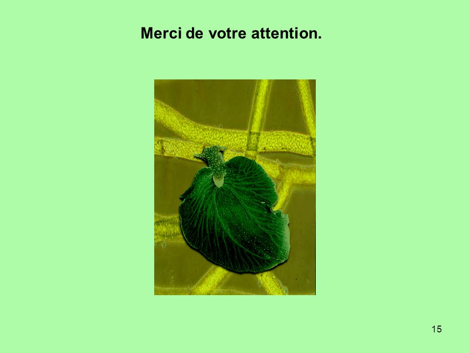 15 Merci de votre attention.