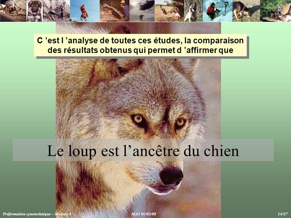 C 'est l 'analyse de toutes ces études, la comparaison des résultats obtenus qui permet d 'affirmer que Préformation cynotechnique – Module A MAJ 01/02/08 14/27 Le loup est l'ancêtre du chien