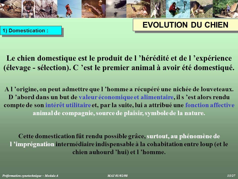 EVOLUTION DU CHIEN 1) Domestication : Le chien domestique est le produit de l 'hérédité et de l 'expérience (élevage - sélection).