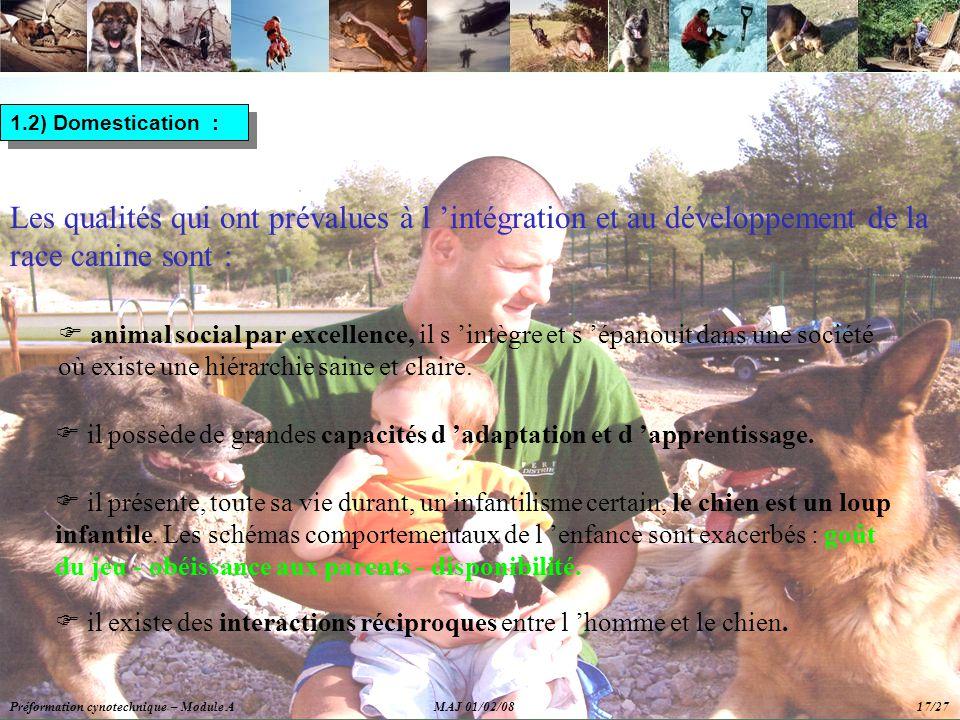 1.2) Domestication : Les qualités qui ont prévalues à l 'intégration et au développement de la race canine sont :  animal social par excellence, il s 'intègre et s 'épanouit dans une société où existe une hiérarchie saine et claire.