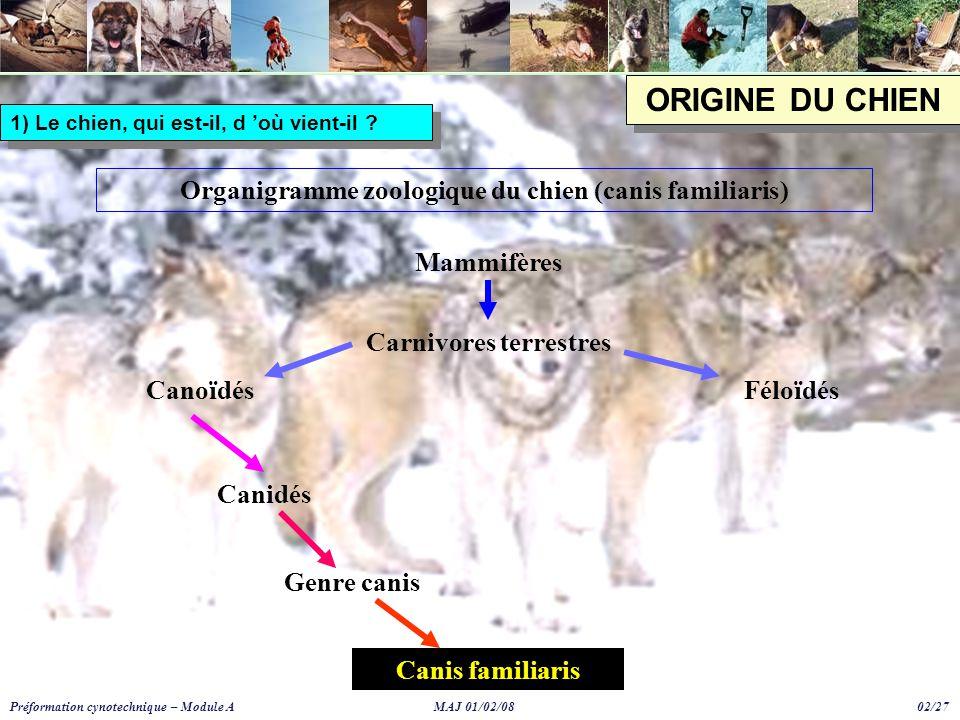 ORIGINE DU CHIEN Organigramme zoologique du chien (canis familiaris) Mammifères Carnivores terrestres CanoïdésFéloïdés Canidés Genre canis Canis familiaris 1) Le chien, qui est-il, d 'où vient-il .