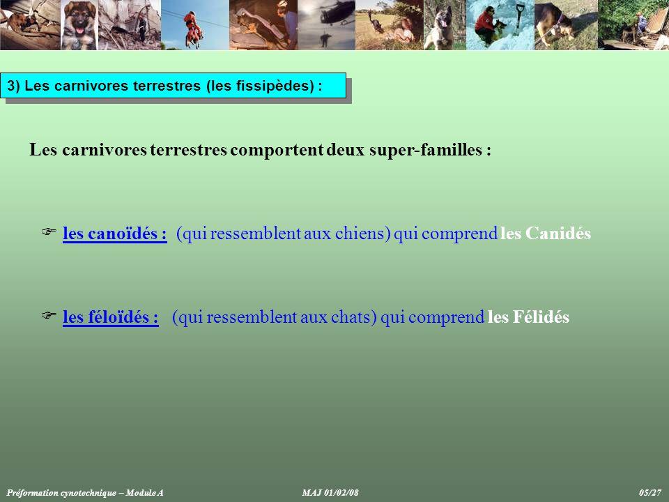 3) Les carnivores terrestres (les fissipèdes) : Les carnivores terrestres comportent deux super-familles :  les canoïdés : (qui ressemblent aux chiens) qui comprend les Canidés  les féloïdés : (qui ressemblent aux chats) qui comprend les Félidés Préformation cynotechnique – Module A MAJ 01/02/08 05/27