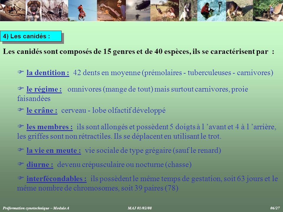 5) Genre canis :  canis lupus : loup, comprend 32 sous-espèces qui mesurent de 55 à 85 cm  canis latrans : coyote, 20 sous-espèces (55 cm, gris fauve)  canis auréus : chacal doré  canis adustus : chacal rayé  canis mésomélas : chacal à charbraques  canis familiaris : chien domestique Préformation cynotechnique – Module A MAJ 01/02/08 07/27