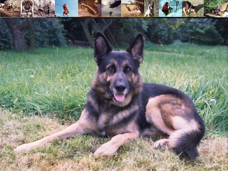 2) La Société Centrale Canine SCC : Les objectifs de la SCC :  la communication sur les chiens de race en France (notamment conseils d 'acquisition aux particuliers).