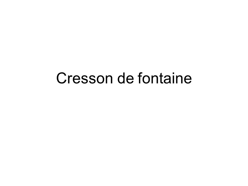 Cresson de fontaine