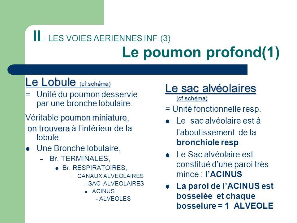 II.- LES VOIES AERIENNES INF.(3) Le poumon profond(1) Le Lobule (cf.schéma) = Unité du poumon desservie par une bronche lobulaire. poumon miniature, V