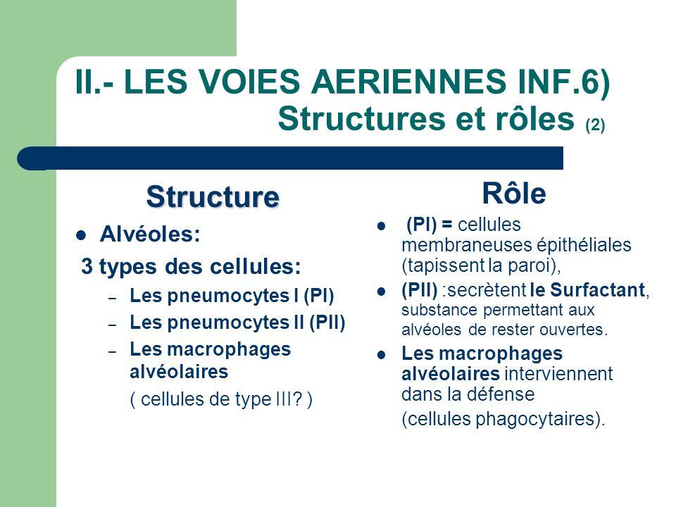 II.- LES VOIES AERIENNES INF.6) Structures et rôles (2) Structure  Alvéoles: 3 types des cellules: – Les pneumocytes I (PI) – Les pneumocytes II (PlI