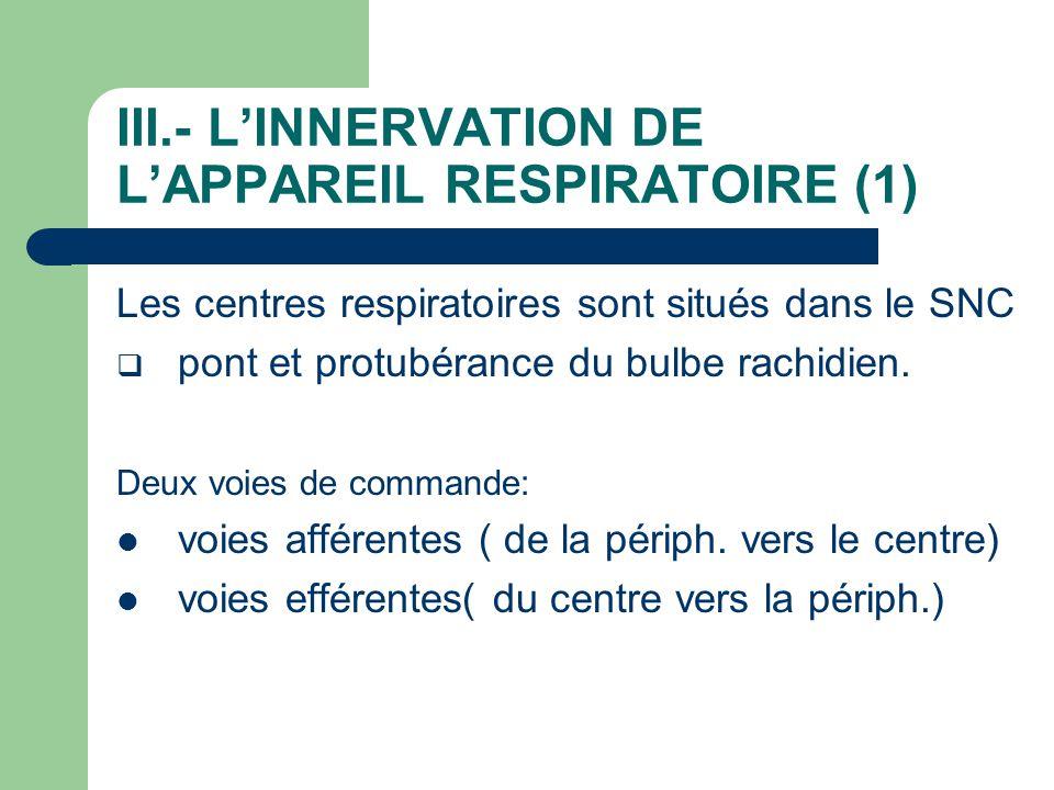 III.- L'INNERVATION DE L'APPAREIL RESPIRATOIRE (1) Les centres respiratoires sont situés dans le SNC  pont et protubérance du bulbe rachidien. Deux v