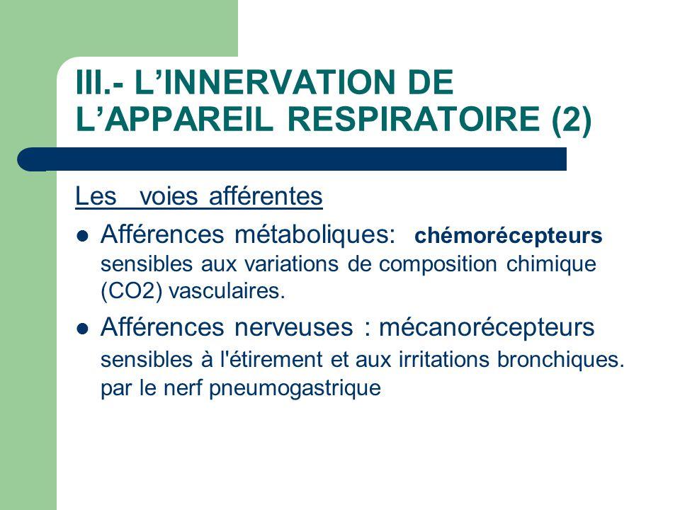 III.- L'INNERVATION DE L'APPAREIL RESPIRATOIRE (2) Les voies afférentes  Afférences métaboliques: chémorécepteurs sensibles aux variations de composi