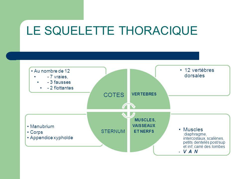 LE SQUELETTE THORACIQUE •Muscles :diaphragme, intercostaux, scalènes, petits dentelés post/sup et inf, carré des lombes • V A N •Manubrium •Corps •App