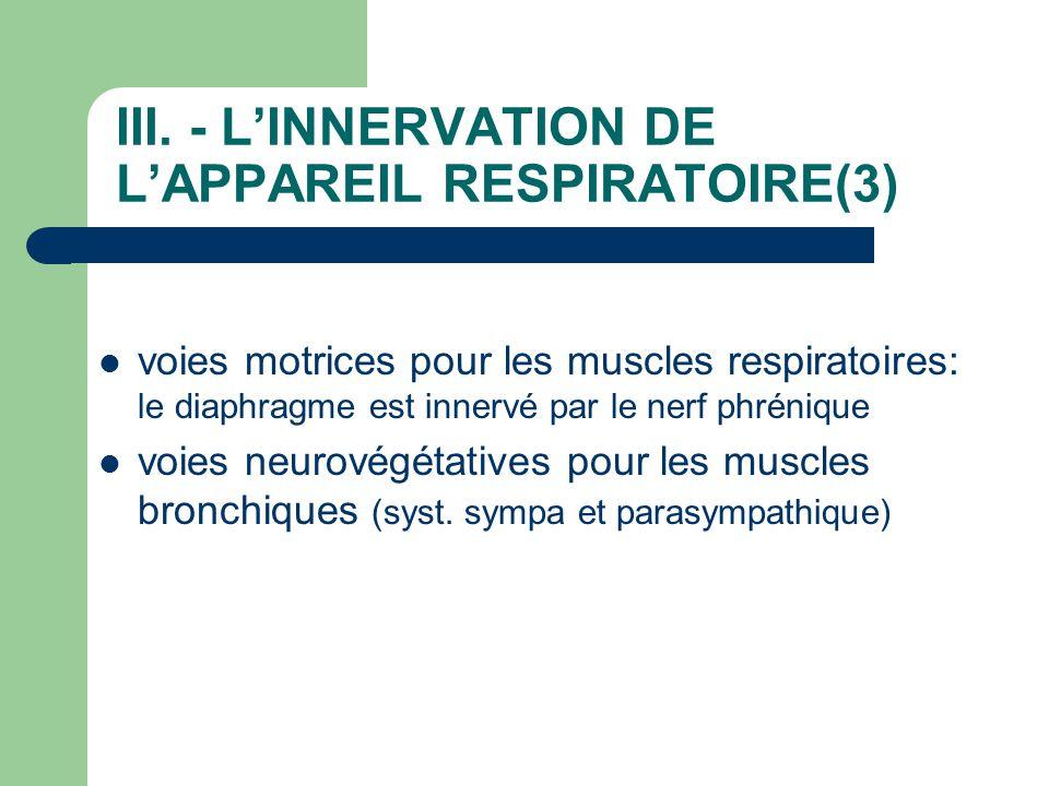III. - L'INNERVATION DE L'APPAREIL RESPIRATOIRE(3)  voies motrices pour les muscles respiratoires: le diaphragme est innervé par le nerf phrénique 