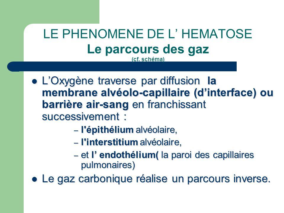LE PHENOMENE DE L' HEMATOSE Le parcours des gaz (cf. schéma)  L'Oxygène traverse par diffusion la membrane alvéolo-capillaire (d'interface) ou barriè