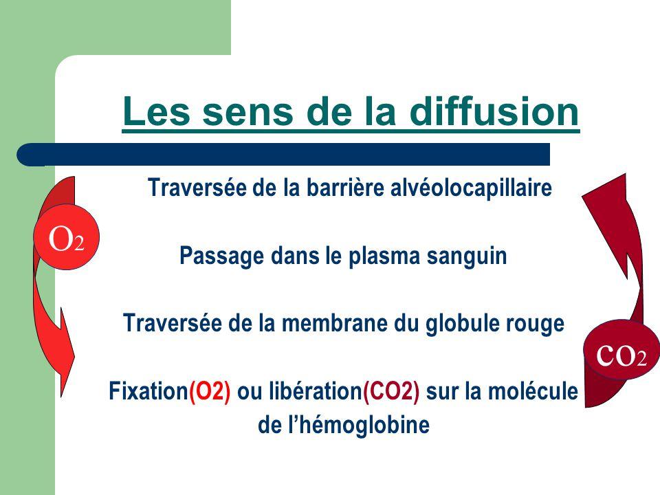 Les sens de la diffusion Traversée de la barrière alvéolocapillaire Passage dans le plasma sanguin Traversée de la membrane du globule rouge Fixation(