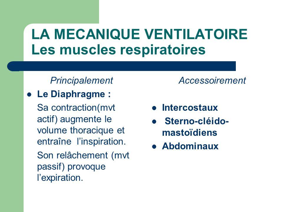 LA MECANIQUE VENTILATOIRE Les muscles respiratoires Principalement  Le Diaphragme : Sa contraction(mvt actif) augmente le volume thoracique et entraî