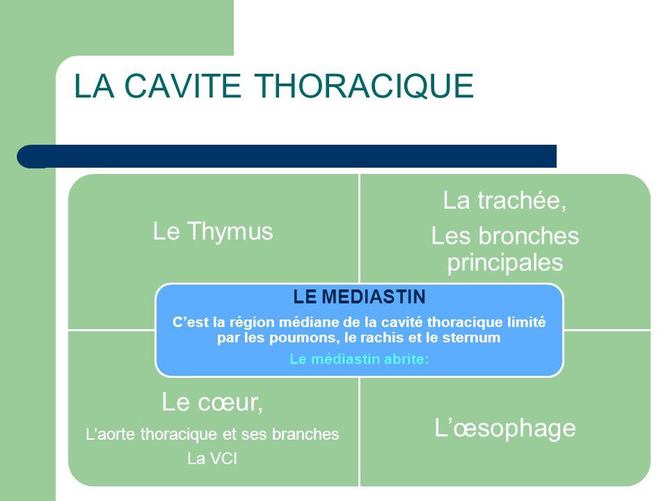 LA CAVITE THORACIQUE Le Thymus La trachée, Les bronches principales Le cœur, L'aorte thoracique et ses branches La VCI L'œsophage LE MEDIASTIN C'est l
