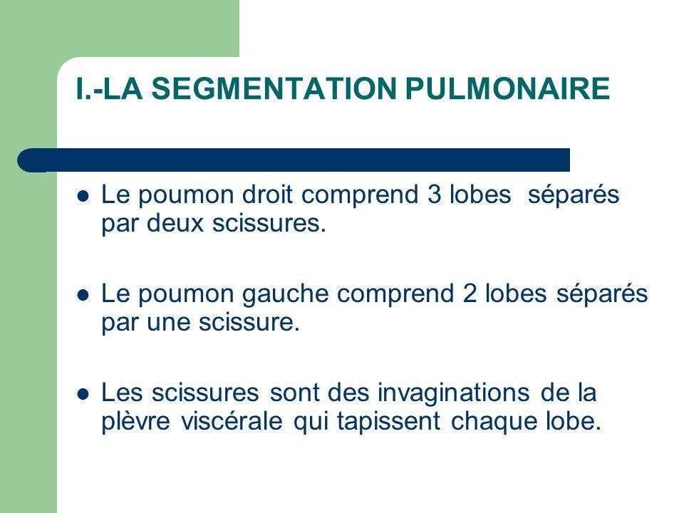 Poumon droit / Poumon gauche I.-LA SEGMENTATION PULMONAIRE Poumon droit / Poumon gauche  LOBE SUPERIEUR – 3 Segments  LOBE MOYEN – 2 Segments  LOBE INFERIEUR – 5 Segments  LOBE SUPERIEUR – 5 Segments  LOBE INFERIEUR - 5 Segments