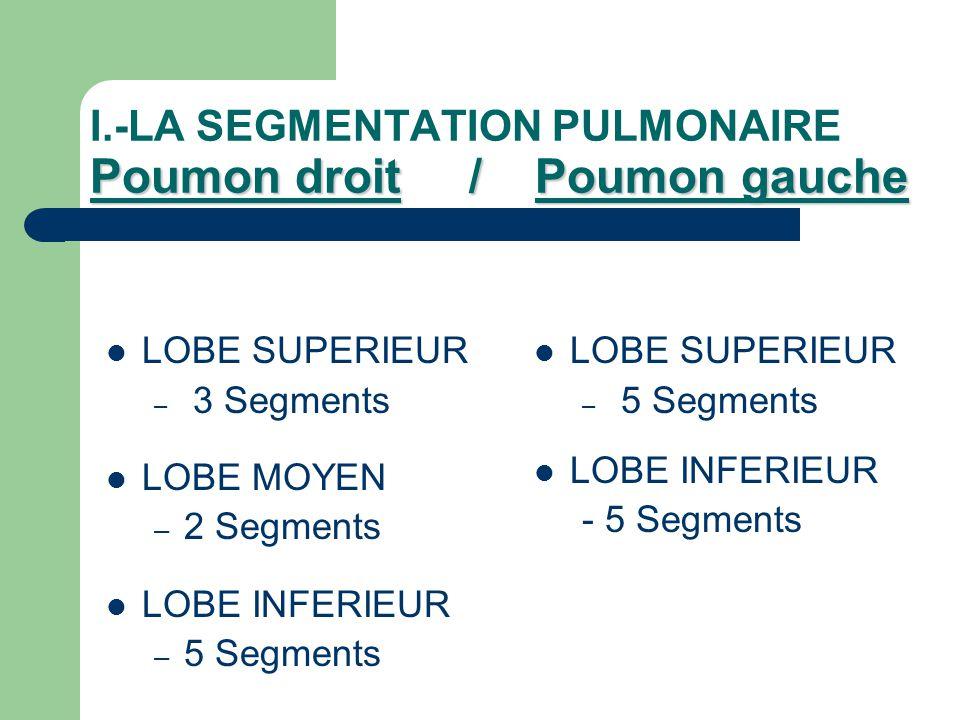Poumon droit / Poumon gauche I.-LA SEGMENTATION PULMONAIRE Poumon droit / Poumon gauche  LOBE SUPERIEUR – 3 Segments  LOBE MOYEN – 2 Segments  LOBE