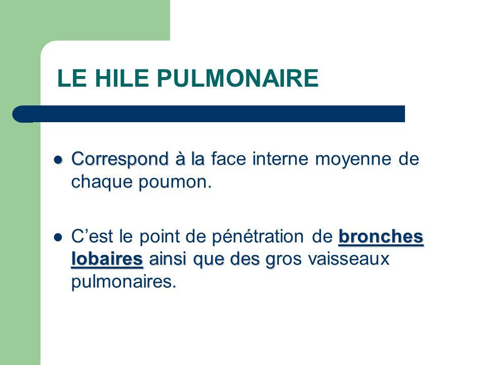 LE HILE PULMONAIRE  Correspond à la  Correspond à la face interne moyenne de chaque poumon. bronches lobaires ainsi que des g  C'est le point de pé