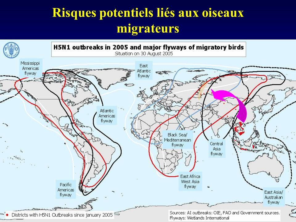 Risques potentiels liés aux oiseaux migrateurs