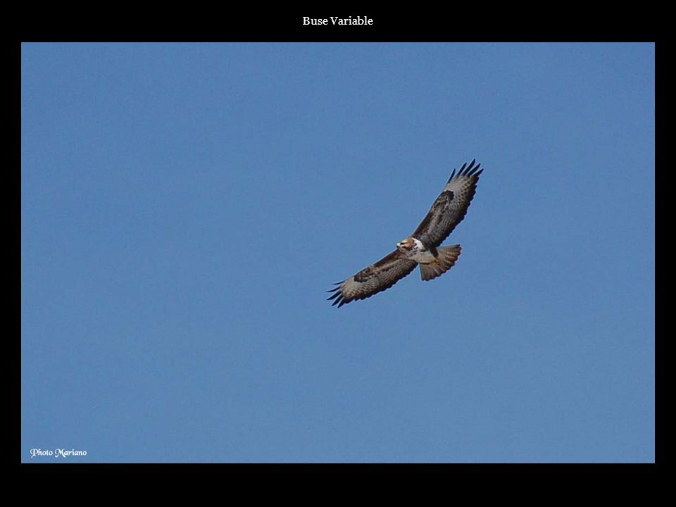 ..... Buse Variable