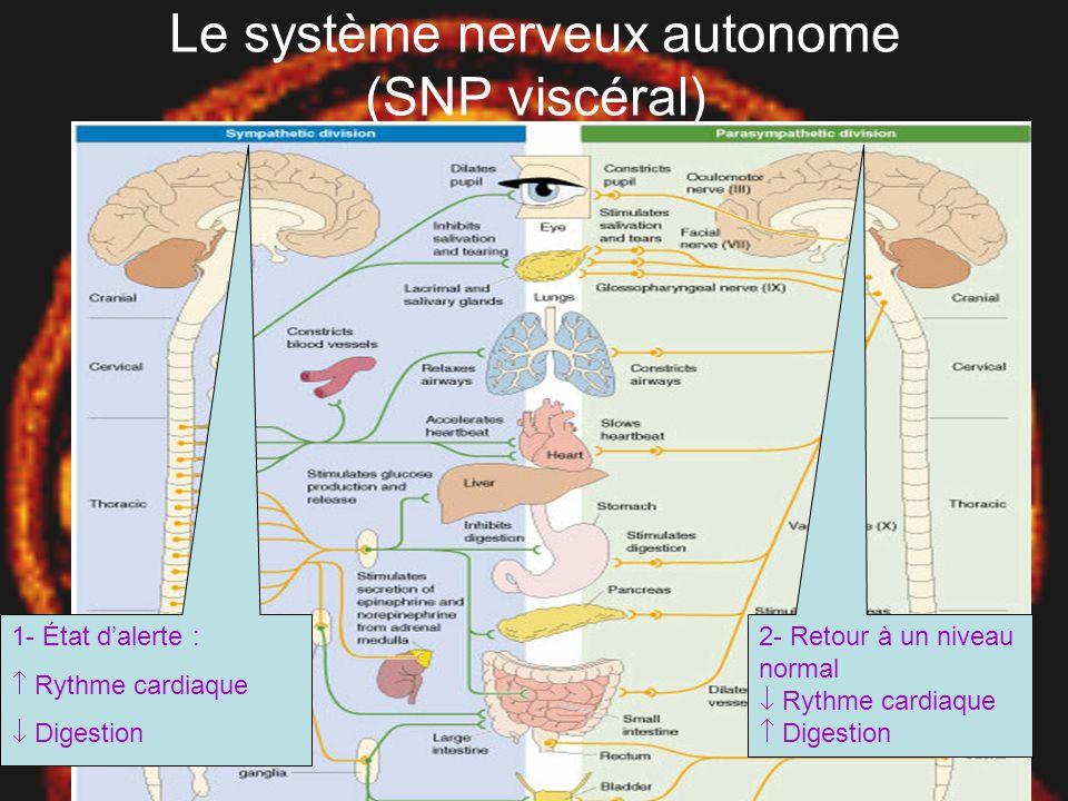 UQAM EDU 7492 Gr. 10 Pierre-Luc Gilbert Tremblay 21 mai, 2003 Le système nerveux périphérique (SNP) •Contient nerfs spinaux –Axones sensoriels somatiq
