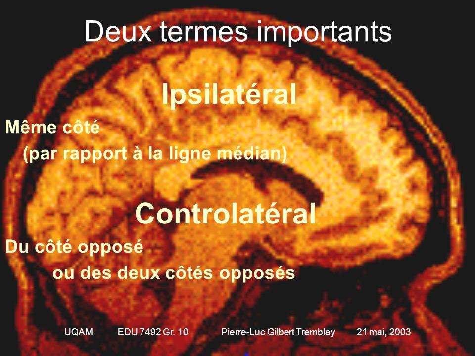 UQAM EDU 7492 Gr. 10 Pierre-Luc Gilbert Tremblay 21 mai, 2003 Quelques références anatomiques 3 axes 1.Antéro-postérieur ou Rostro-caudal 2.Dorsal-ven