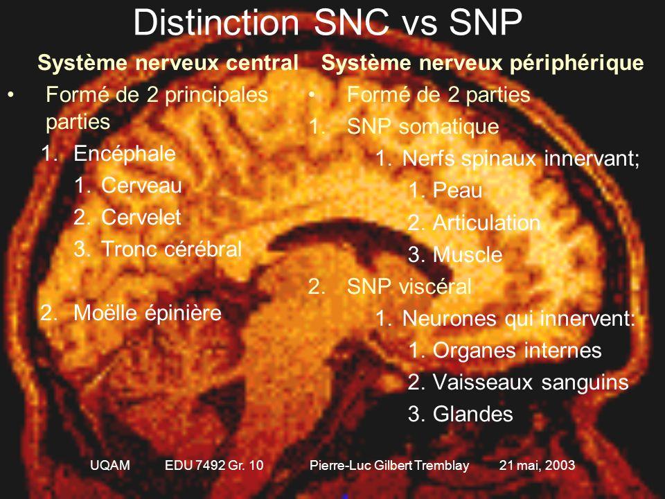 UQAM EDU 7492 Gr. 10 Pierre-Luc Gilbert Tremblay 21 mai, 2003 Le système nerveux dans son ensemble Le système nerveux (SN) Le SN central Le SN périphé