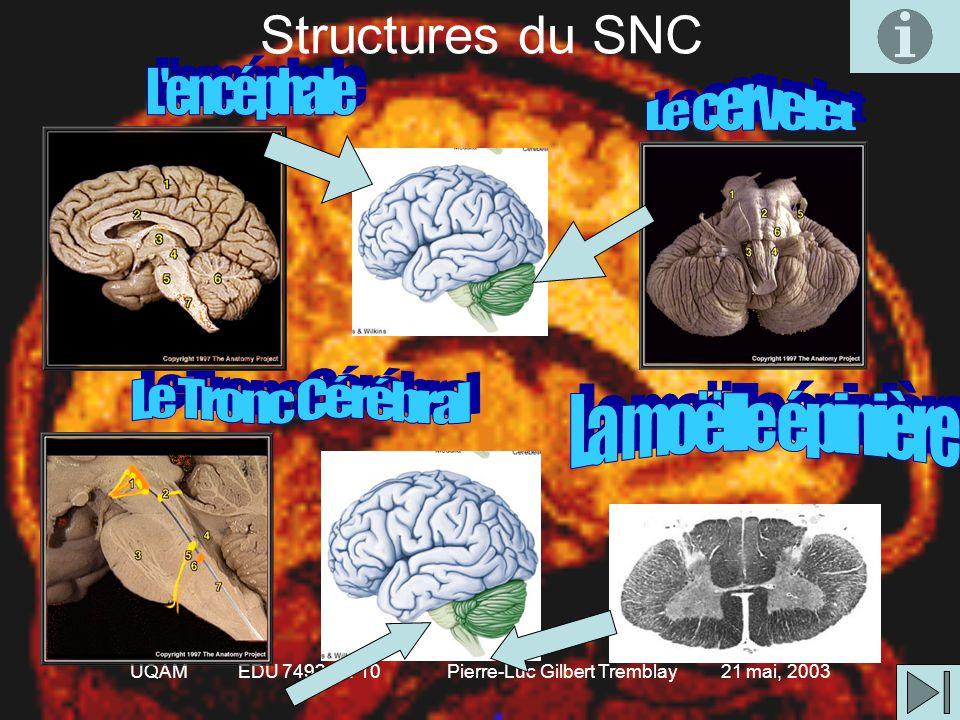 UQAM EDU 7492 Gr. 10 Pierre-Luc Gilbert Tremblay 21 mai, 2003 Distinction SNC vs SNP Système nerveux central •Formé de 2 principales parties 1.Encépha