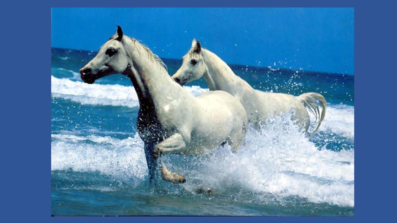 Mon petit doigt m'a dit beaucoup de jolies choses Dans un rêve en couleurs émaillé de brillants Quand la nuit m'emportait sur des chevaux tout blancs Vers un monde meilleur où fleurissent les roses.