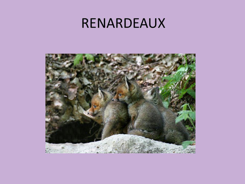 RENARDEAUX