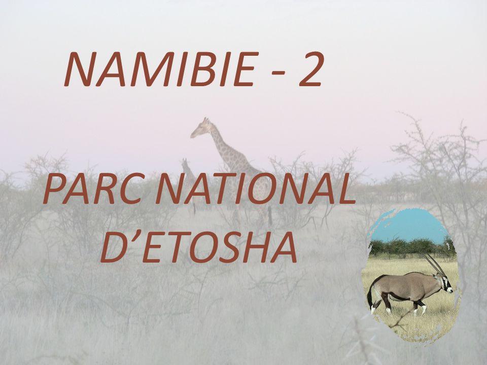NAMIBIE - 2 PARC NATIONAL D'ETOSHA