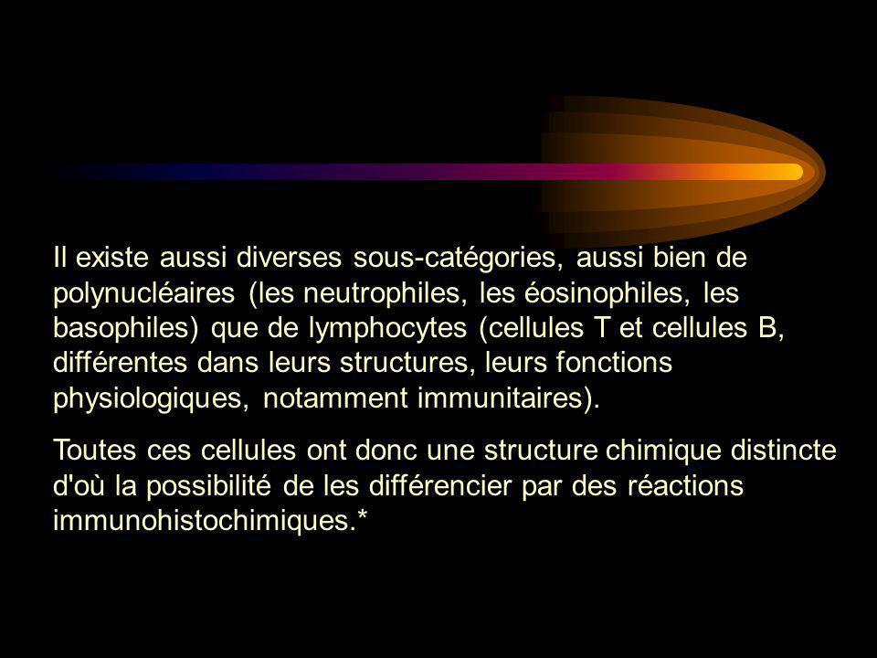 Il existe aussi diverses sous-catégories, aussi bien de polynucléaires (les neutrophiles, les éosinophiles, les basophiles) que de lymphocytes (cellul