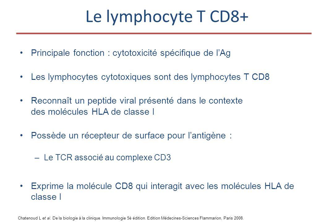 Le lymphocyte T CD8+ •Principale fonction : cytotoxicité spécifique de l'Ag •Les lymphocytes cytotoxiques sont des lymphocytes T CD8 •Reconnaît un peptide viral présenté dans le contexte des molécules HLA de classe I •Possède un récepteur de surface pour l'antigène : –Le TCR associé au complexe CD3 •Exprime la molécule CD8 qui interagit avec les molécules HLA de classe I Chatenoud L et al.