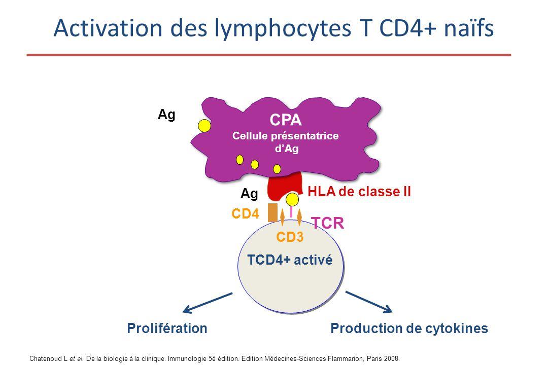 Activation des lymphocytes T CD4+ naïfs HLA de classe II TCR CD4 Ag CD3 TCD4+ activé ProliférationProduction de cytokines CPA Cellule présentatrice d'Ag Ag Chatenoud L et al.