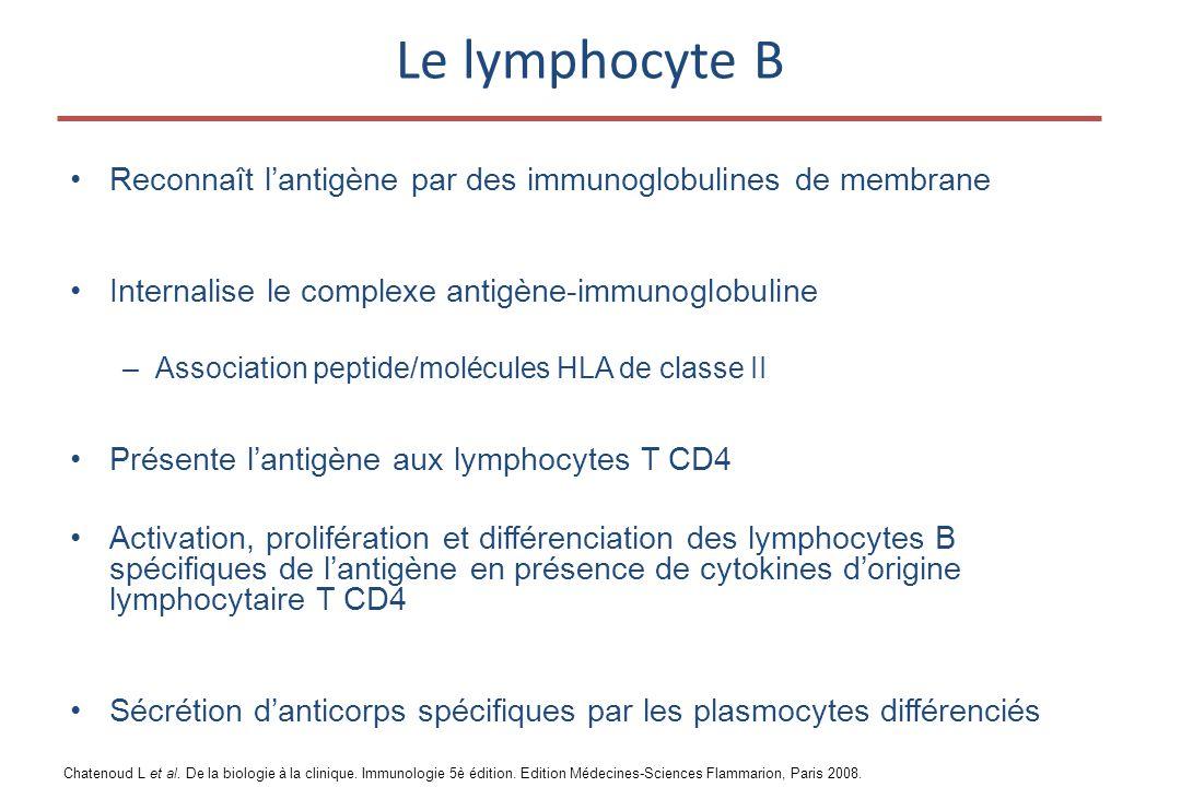 Le lymphocyte B •Reconnaît l'antigène par des immunoglobulines de membrane •Internalise le complexe antigène-immunoglobuline –Association peptide/molécules HLA de classe II •Présente l'antigène aux lymphocytes T CD4 •Activation, prolifération et différenciation des lymphocytes B spécifiques de l'antigène en présence de cytokines d'origine lymphocytaire T CD4 •Sécrétion d'anticorps spécifiques par les plasmocytes différenciés Chatenoud L et al.