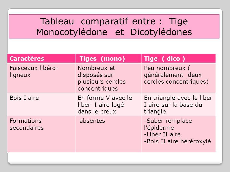 Caractères Tiges (mono)Tige ( dico ) Faisceaux libéro- ligneux Nombreux et disposés sur plusieurs cercles concentriques Peu nombreux ( généralement de