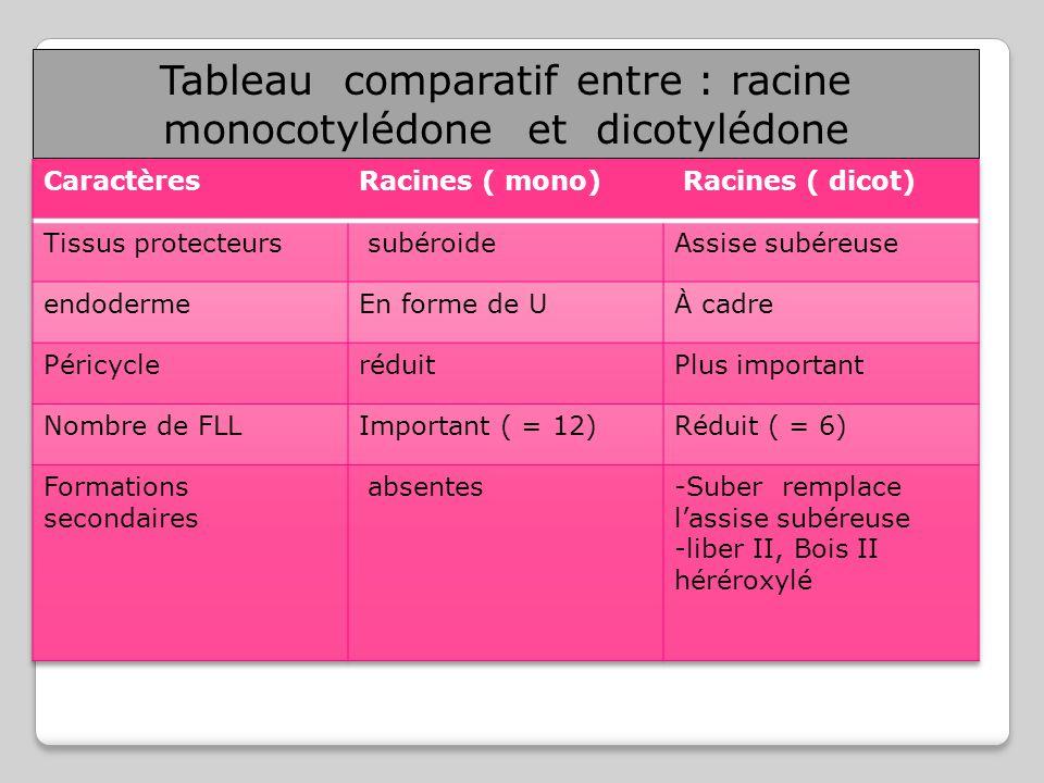 Tableau comparatif entre : racine monocotylédone et dicotylédone