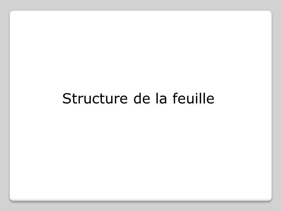 Structure de la feuille