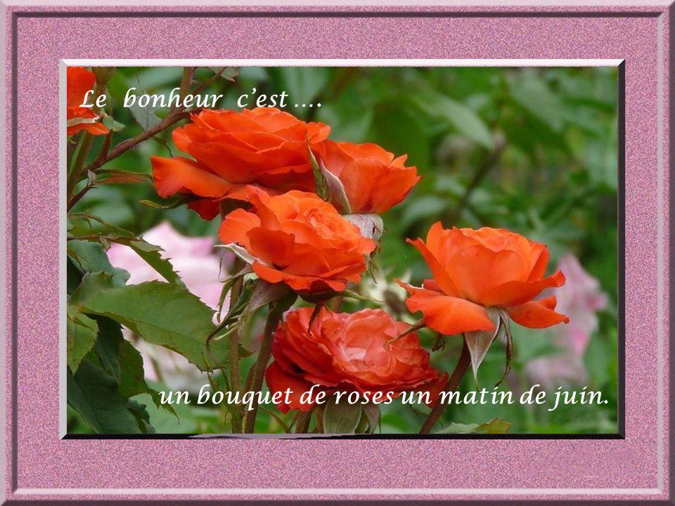 Le bonheur c'est …. un bouquet de roses un matin de juin.