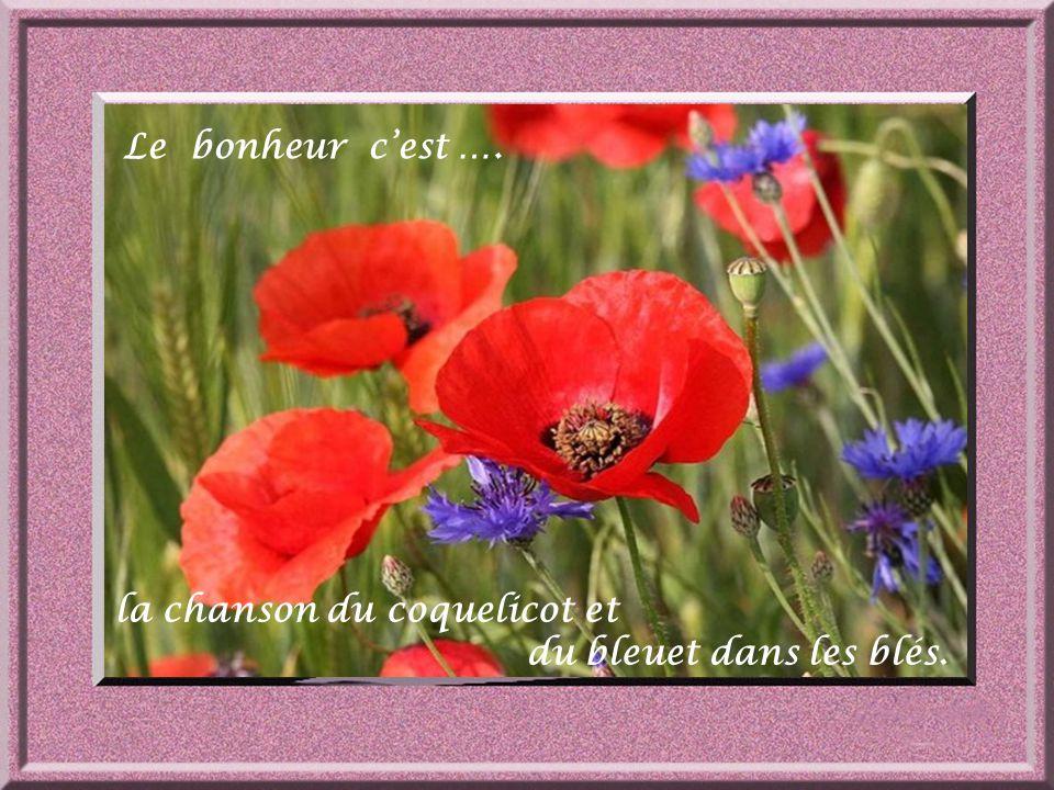 Le bonheur c'est …. la chanson du coquelicot et du bleuet dans les blés.